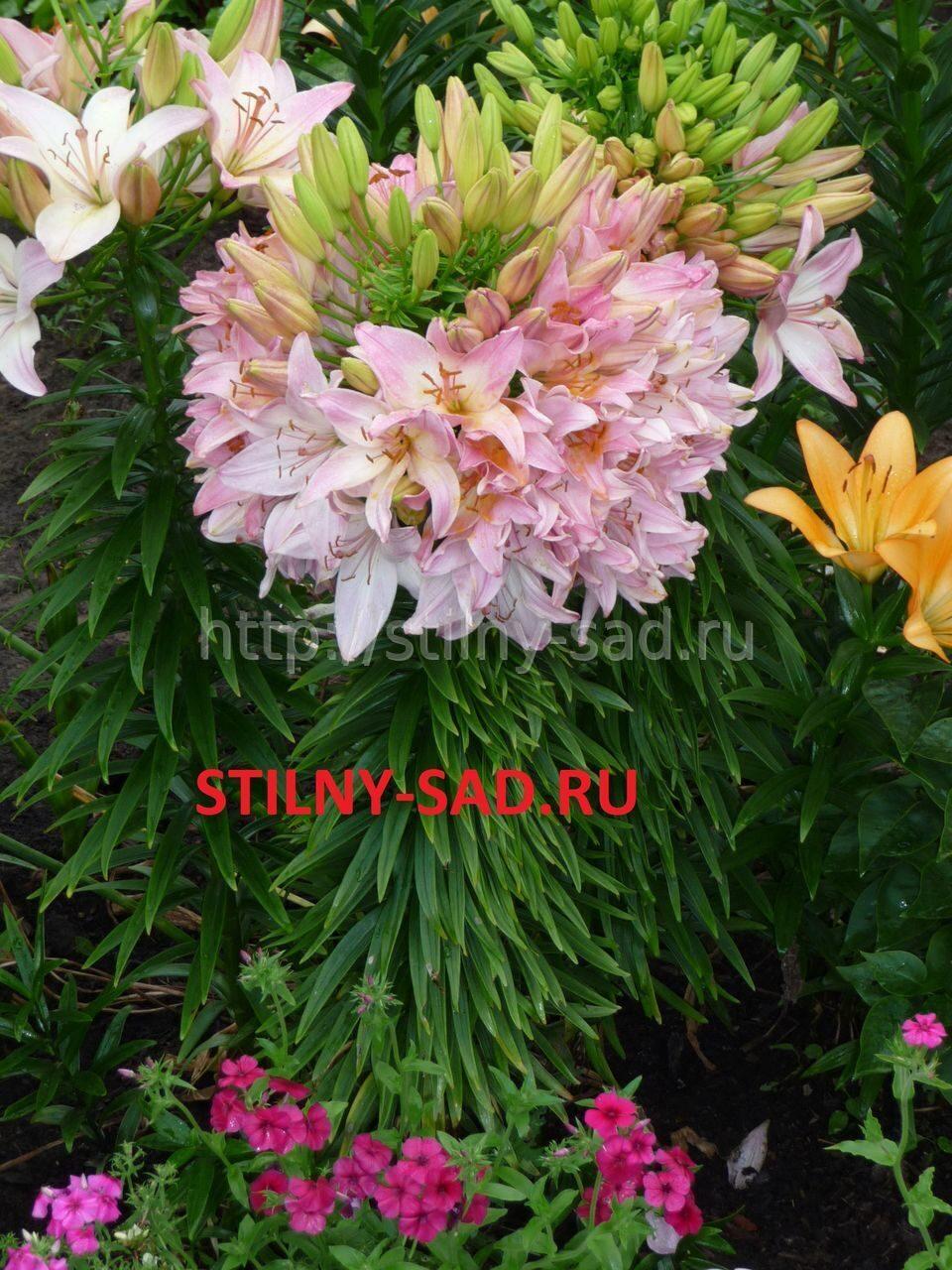 цветов многолетних: flowerf.ru/index.php/868-foto-cvetov-mnogoletnih